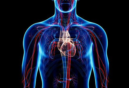 A Osman MD Cardiovascular Surgeon