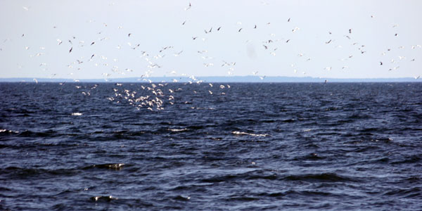 migrating1
