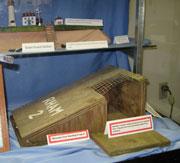 Roseate Tern Nesting Project