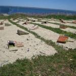 Tern Boxes