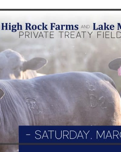 Lake Majestik Farms | HIgh Quality Brangus Breeder located in Alabama