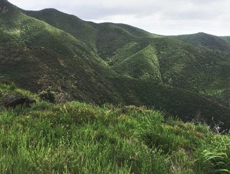 Trail Trekking