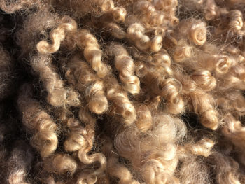 A natural color fleece
