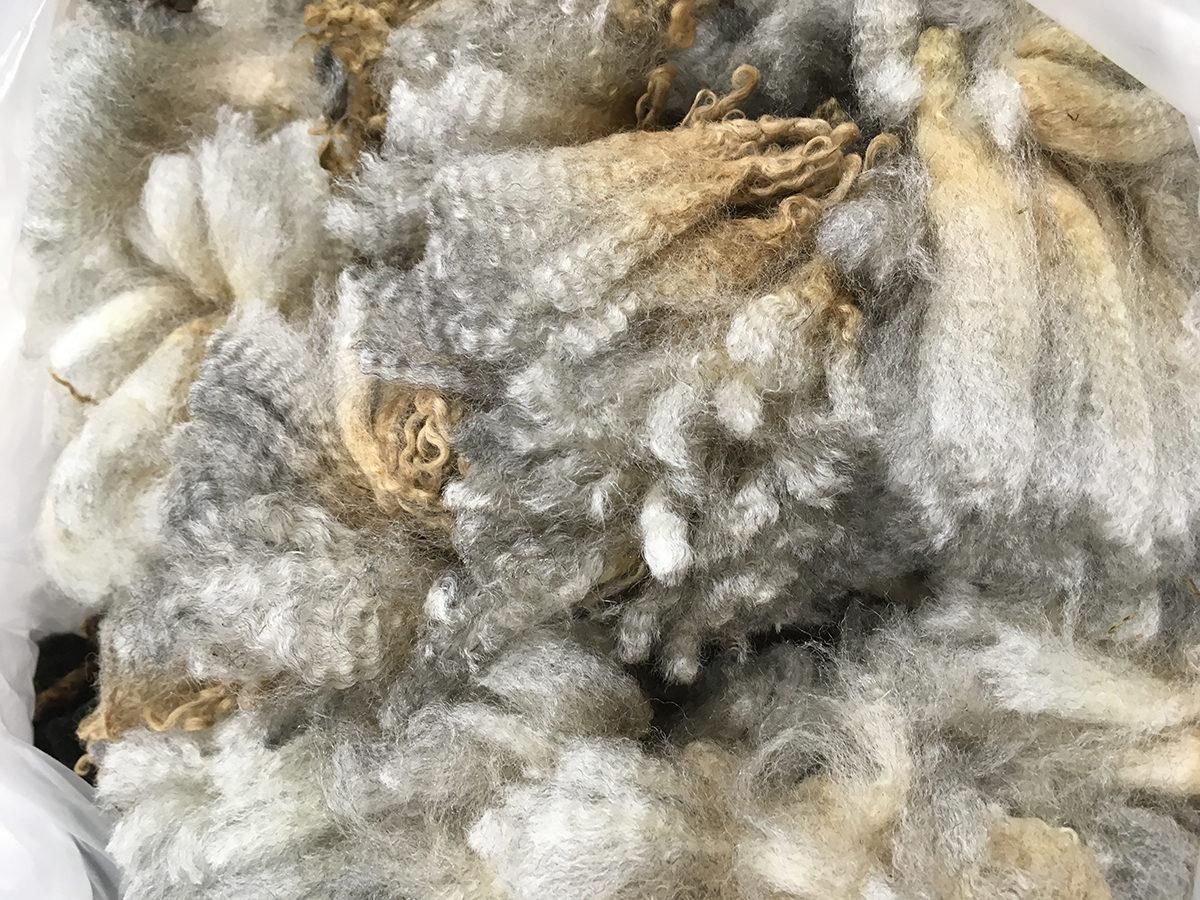Romney Sheep Wool Fiber