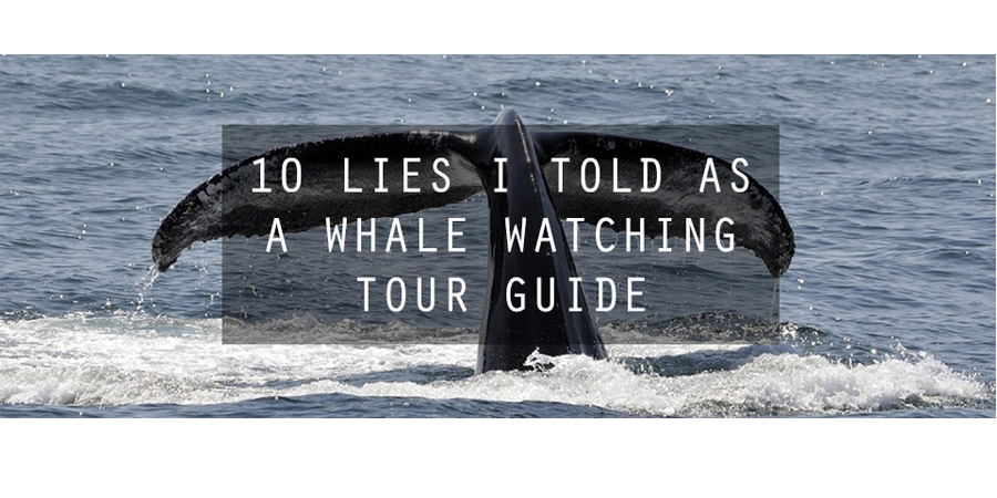 Photo of 10 Lies I Told as a Whale Watching Tour Guide