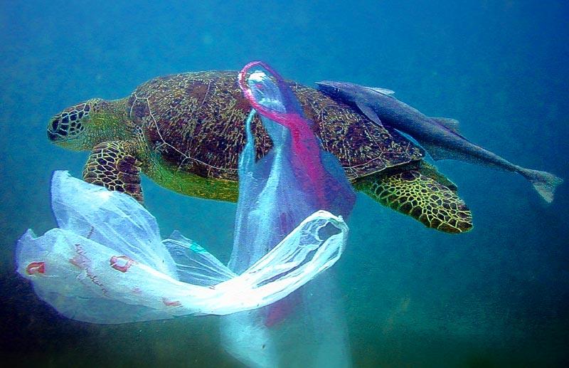 Turtle-Sea-PlasticBag-Shopping-Dear-Been-Asda-Tesco-Morrisons-Lidl-Sainsburys-Supermarkets