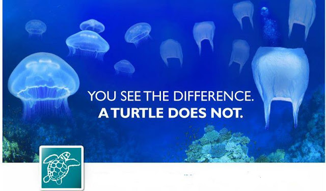 Turtle-cant-differentiate-Jellyfish-and-plastic-bag.-stop-throwing-plastic-to-the-sea