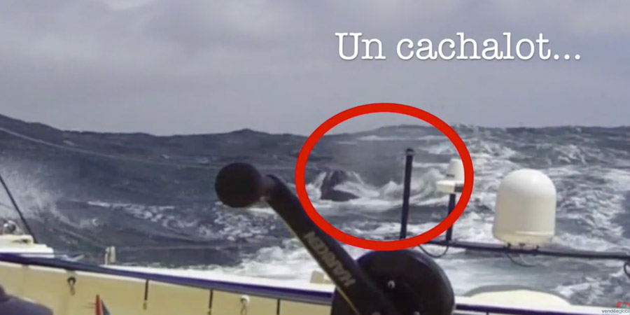 Photo of Bastide Otio and the whale: the collision seen from the boat