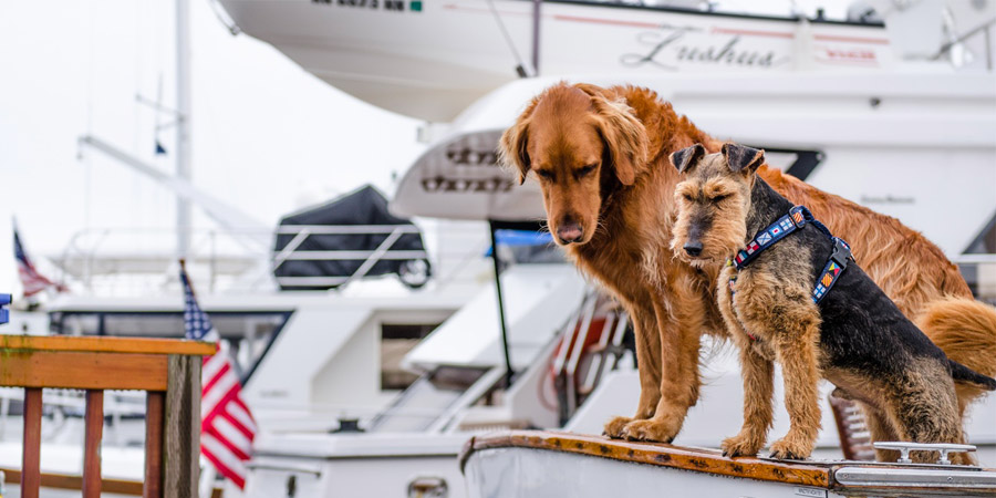 Photo of Everything you need to know about Sailing with Pets