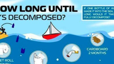 Photo of How long until your Waste is decomposed in the Water? INFOGRAPHIC
