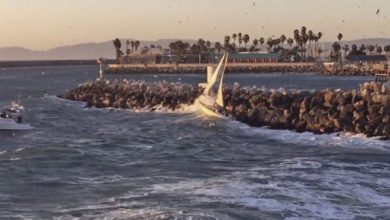 Photo of Dramatic Rescue at Redondo Beach Harbour. VIDEO