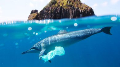 Photo of Solubag – The Invention That Just Might Save The Oceans