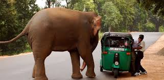 Elephant in the room? No Jumbos in Jharkhand!