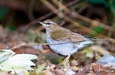 Nepal adds new bird to its tally!