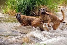 Dogs to protect Rhinos in Kaziranga