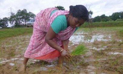 क्या 6000 रु किसानों का समस्याओं को हल करेगा ?