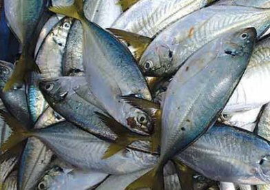 Are people in Patna eating Poisonous Fish?