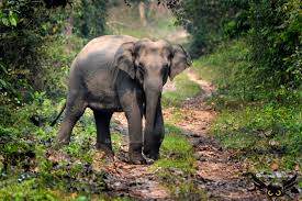 Encroachment= Man Elephant Conflict in Assam