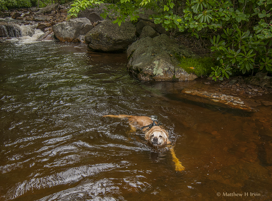 Woof, me swimming!