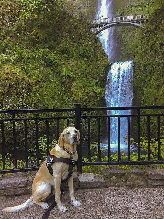 Photo Dog Jackson at Multnomah Falls, Columbia River Gorge. (Caption by Matt.)
