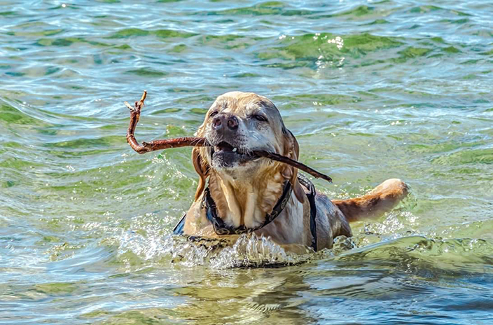 Me two years ago swimming in Lake Michigan, photo by my good friend Robin Long.