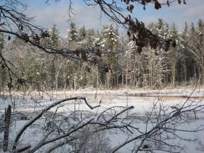 Conservation land at Elizabeth Brook    (Rob Kean)
