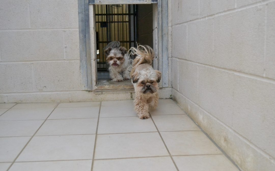 Dogs in adjoining kennel runs