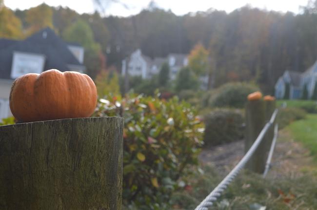 Mini Pumpkins on the fence