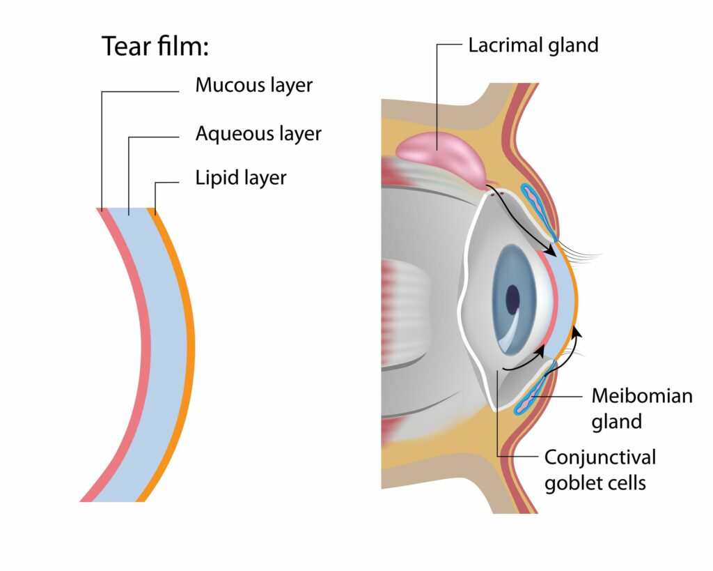 There are 3 different tear film layers all of which are important for tear stability