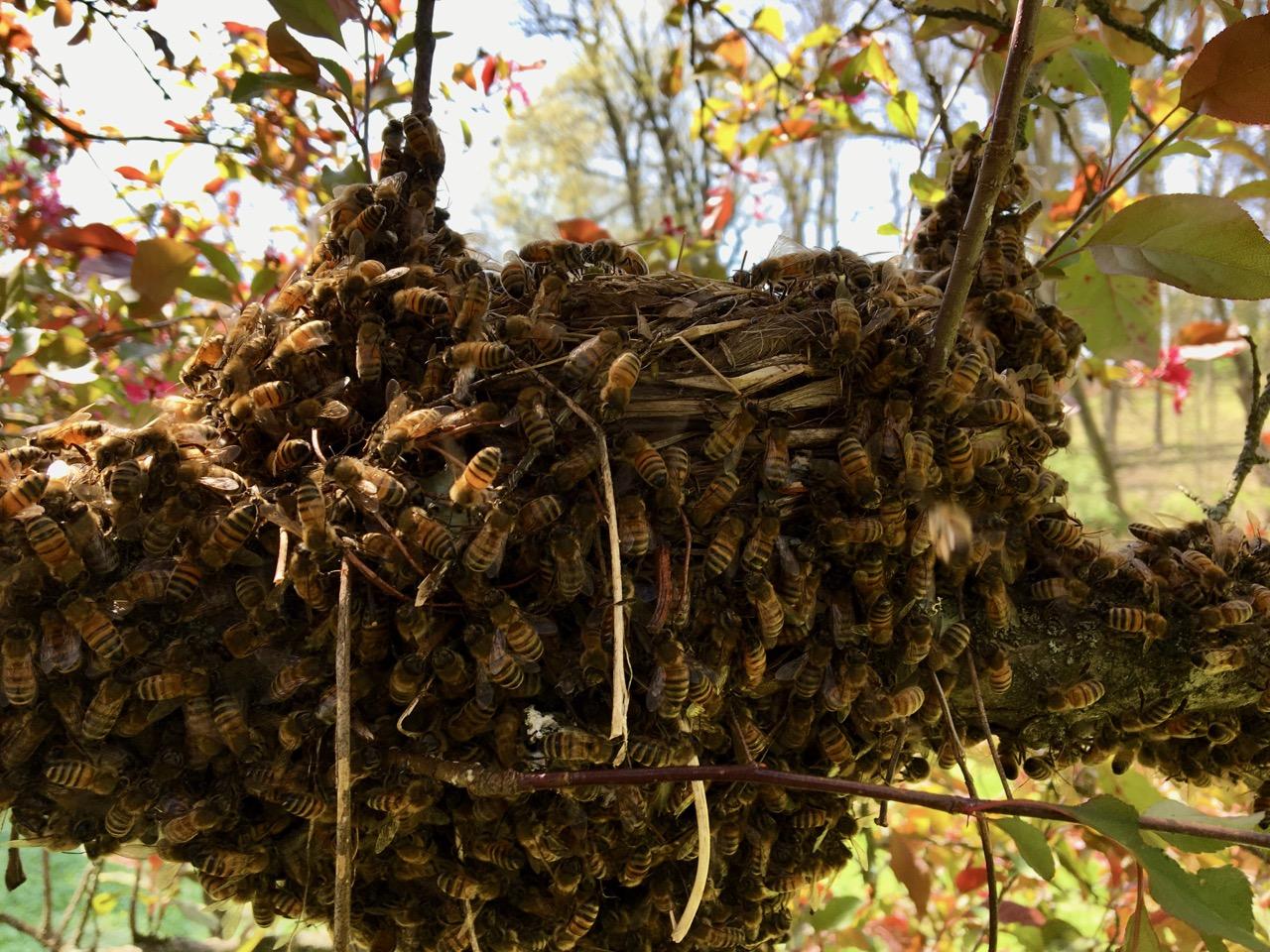 Swarming Season