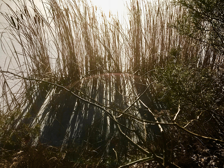 Abstracts in Nature - Lil Olive - Photography