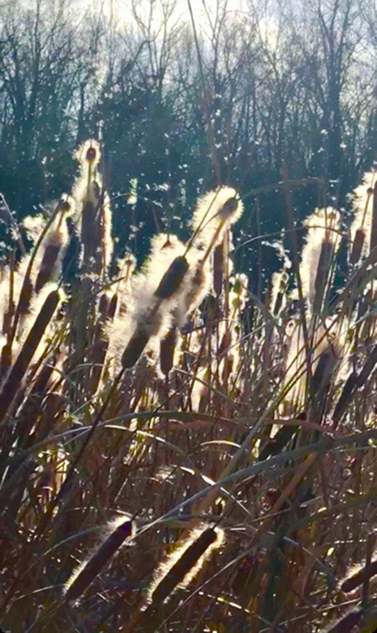 Lil Olive - Cattail Wind