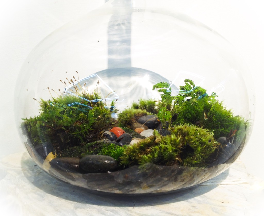 NT Long Neck Terrarium