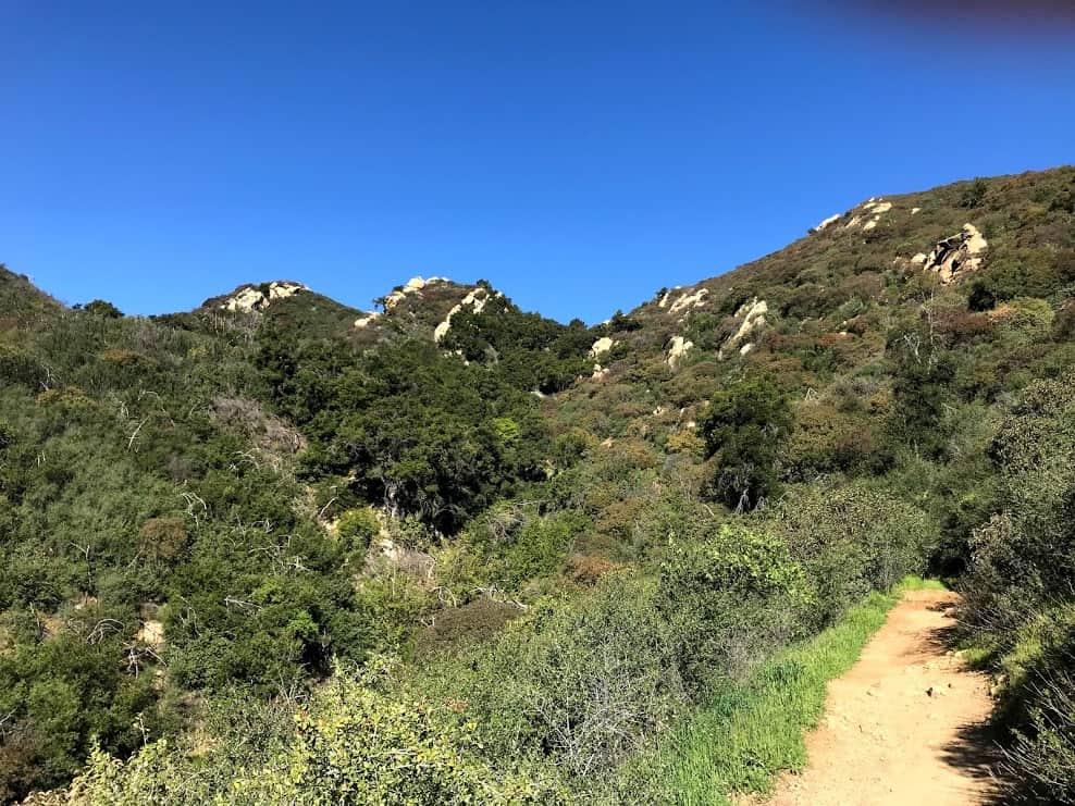 scrub and brushes on the Santa Ynez mountains, Inspiration Point Santa Barbara