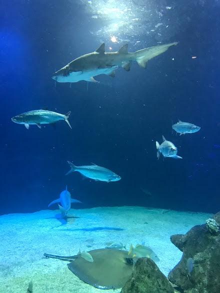 albuquerque aquarium tank