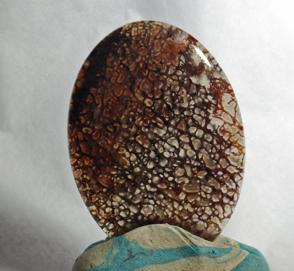 Jurassic Period 145-199 million Years Ago Gem Quality Dinosaur Bone Cab Preform