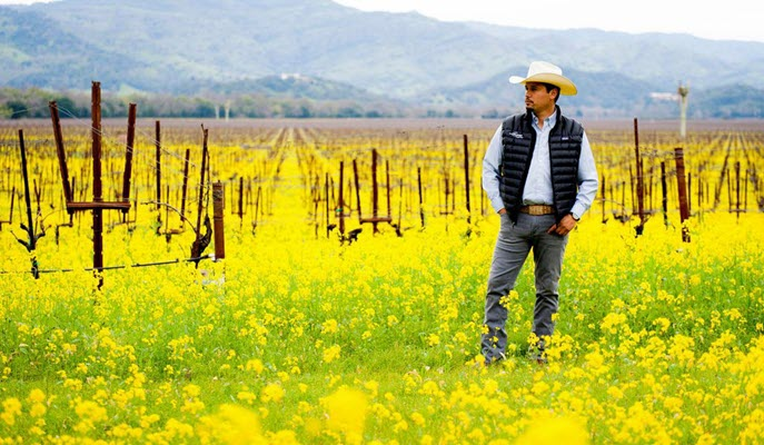 Three Mexican-American Vintners Tell Their Stories