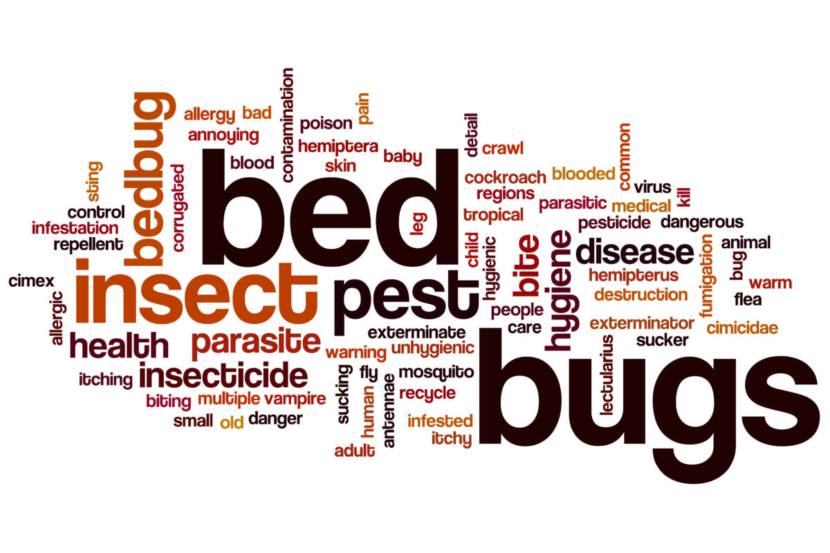 Compare BedBug Treatments