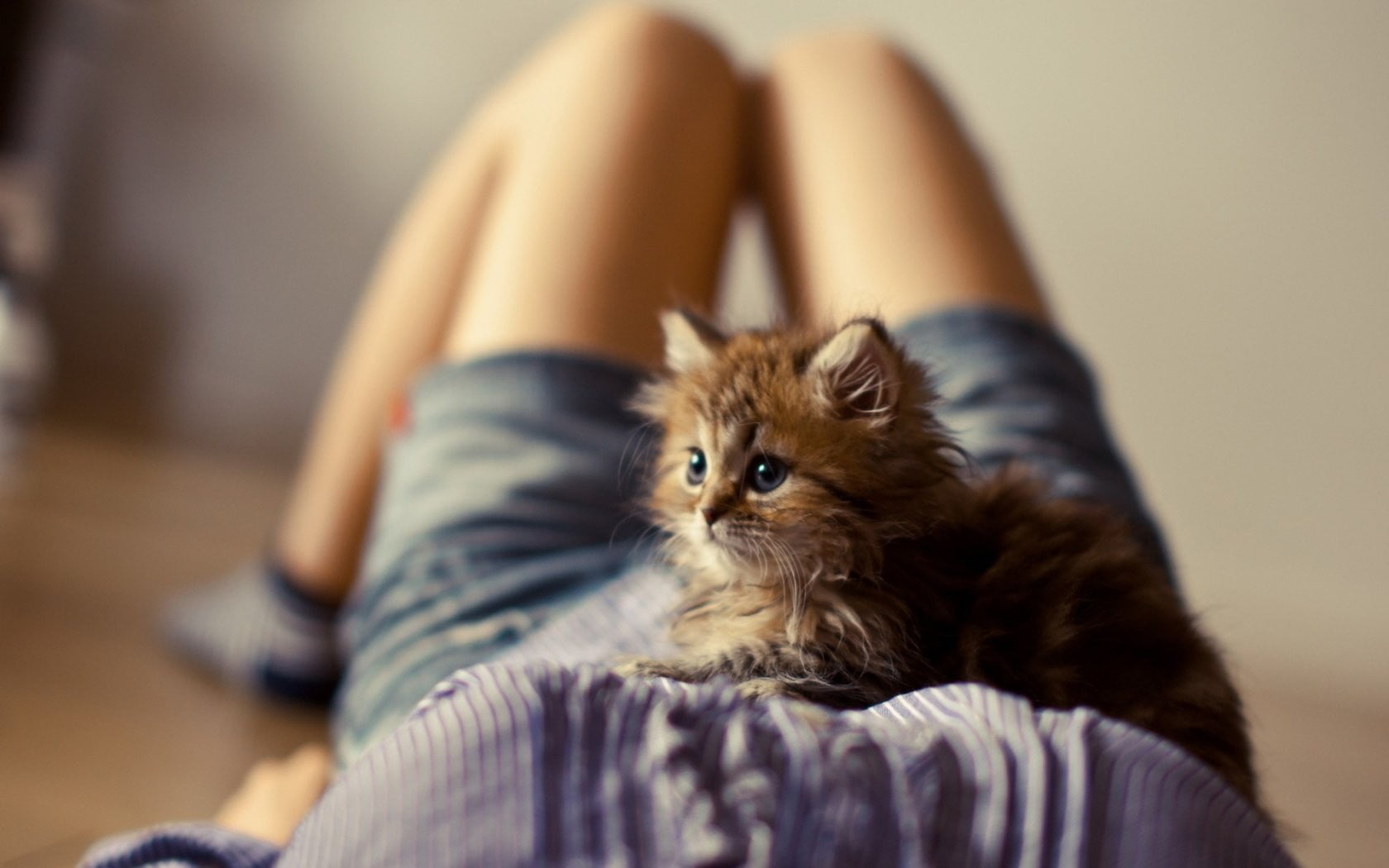 Using Your Cat or Dog as a Sitter