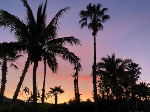 The picturesque palms & pastelsof a Cabo sunset