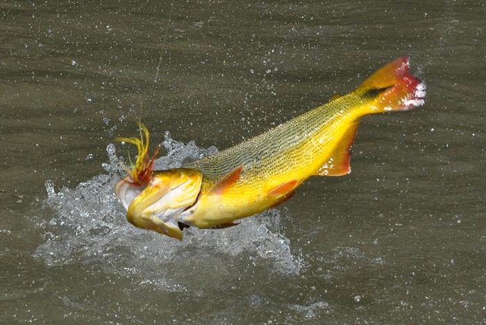 El Carmen Dorado Fishing