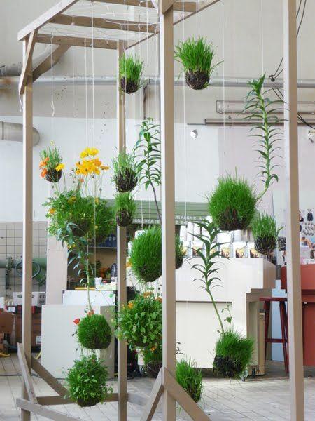 Decoración con plantas colgantes en buena iluminación
