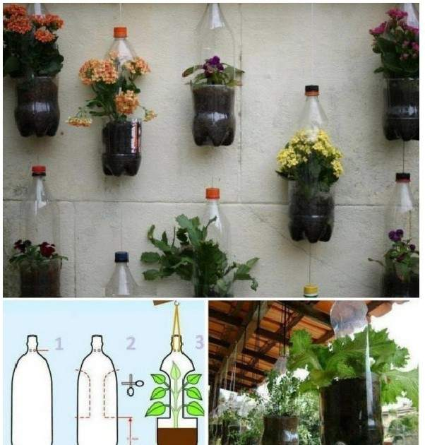 Colgantes de plantas