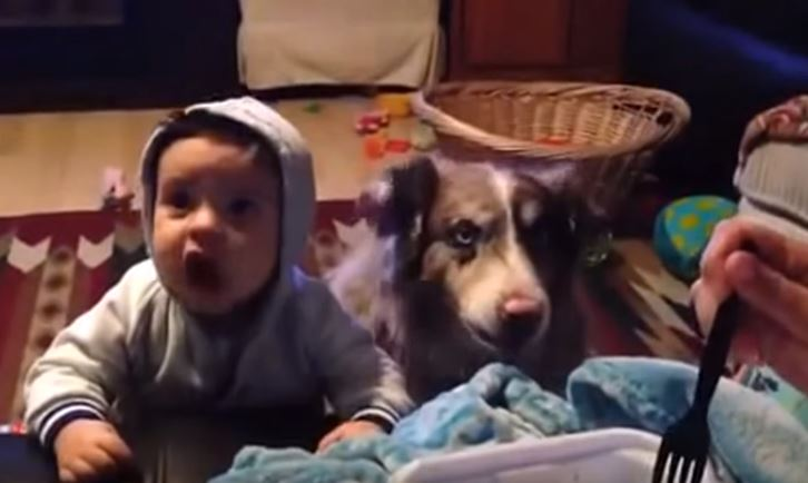 """Intenta hacer que el bebé diga """"Mamá"""" pero el perro se adelanta"""