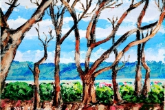 Dried Trees - San Fernando Hill