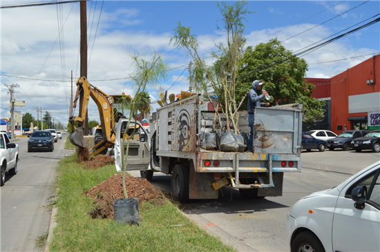 Planta Gobierno Municipal más de 140 árboles en tres espacios públicos de la ciudad