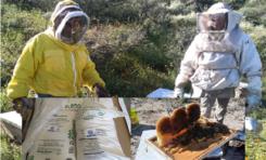 Apoya Gobierno Municipal a apicultores con 18 toneladas de azúcar por temporada de sequía