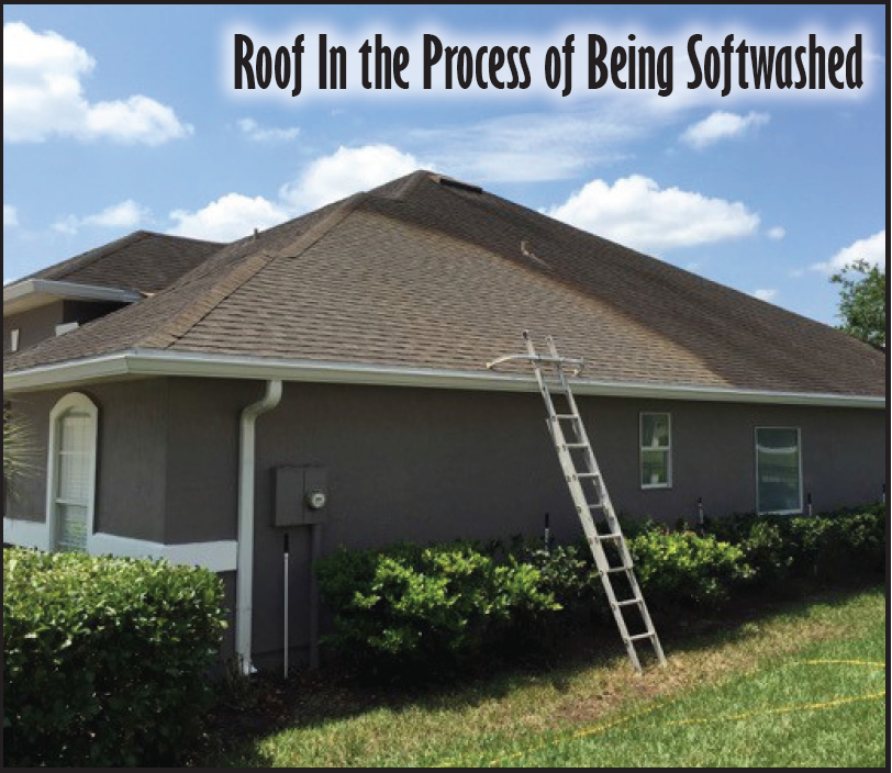 Asphalt Shingle Roof Softwashing