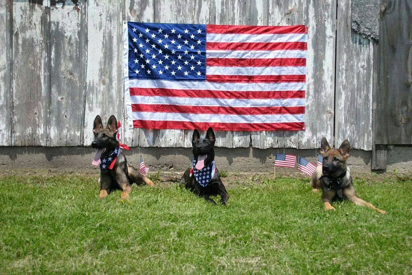 Welcome to <br>Patriot Dog Training