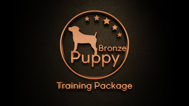 San Antonio puppy training boerne dog training austin obedience training house breaking puppy san marcos stone oak
